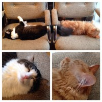Anakin & Mika sleeping in the chairs