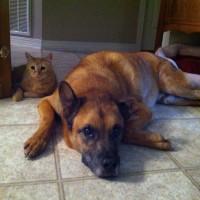 Mika & Buddy