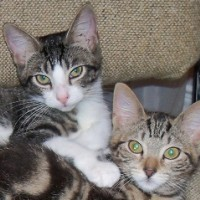 Trixie & Pixie as kittens