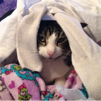 Trixie loves warm laundry