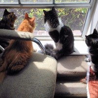 Watching the world, Pixie, Mika, Anakin & Trixie