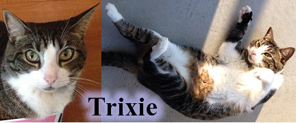 Trixie, Tabby & White, Cat Artist Carrie Hawks' Cats